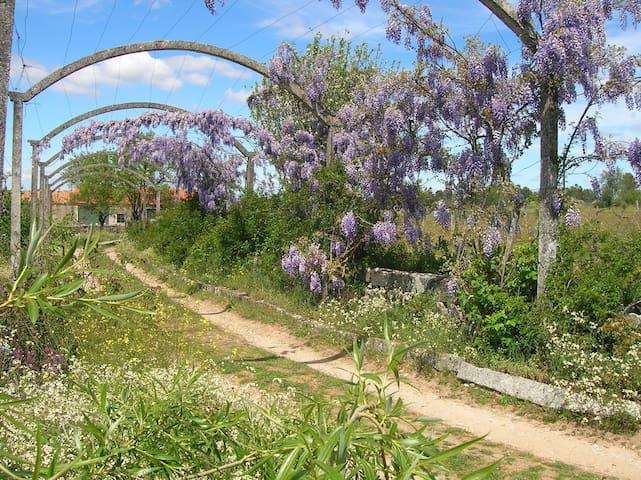 Quinta da Bela Vista - Almeida - Villa