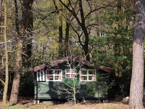A little forest hideaway