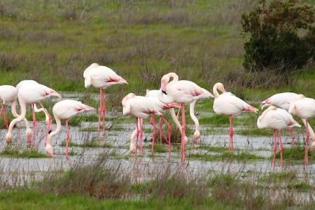 Birders Accommodation, guesthouse or for long stay