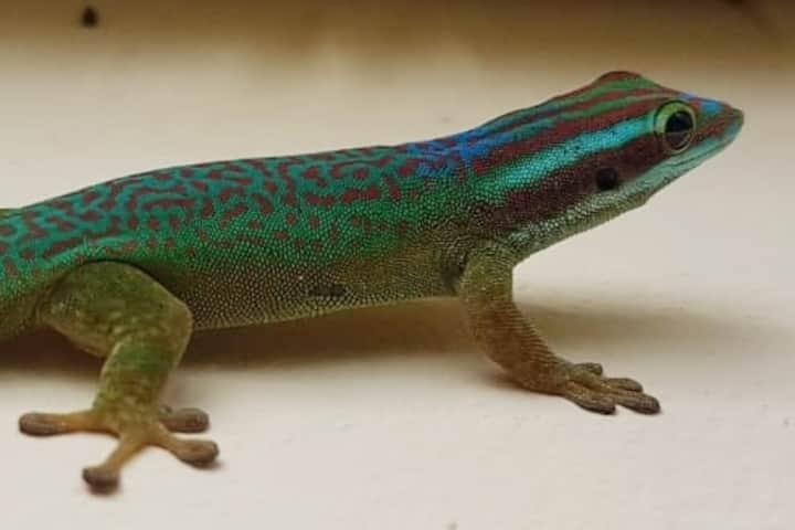 Manapany : le gecko vert 6 places logement entier