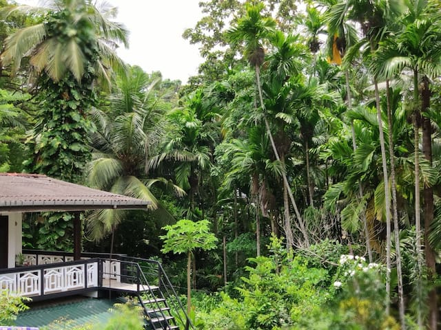 Jungle Hostel Villa