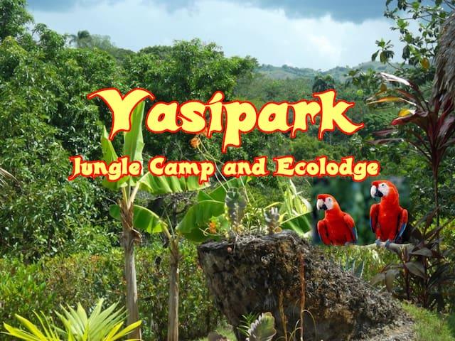 Yasipark - Nature Camp and Ecolodge - C 2 - Yásica Arriba - Hut