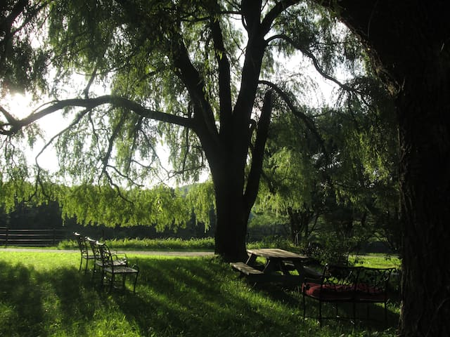 picnic area under the willows