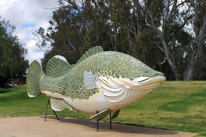 The Big Fish, Tocumwal Murray Cod
