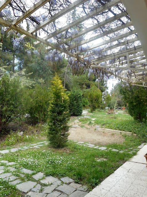 Τα διαμερίσματα, σχεδιασμένα βιοκλιματικά,  είναι κτισμένα σε μία έκταση 5 στρεμμάτων με οργανωμένο κήπο, οπωροφόρα δέντρα και χώρο για παιχνίδι. Παρέχουν μια ευχάριστη θερινή διαμονή στο ιδιαίτερο δροσερό και αναζωογονητικό μικροκλίμα του διπλανού  πευκόδασους, απέχοντας  700μ από την παρθένα παραλία της Κουτσουπιάς και το μονοπάτι Ε9 που οδηγεί στη Σίβηρη και 1500μ από τις οργανωμένες παραλίες, τη μαρίνα με τα καταστήματα και εστιατόρια του ξενοδοχείου Sani Resort.