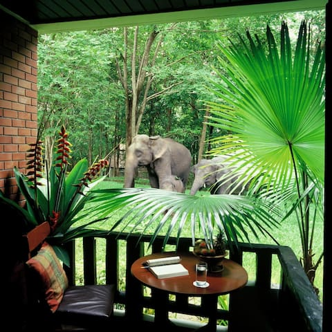Sappraiwan Elephant Resort & Sanctuary