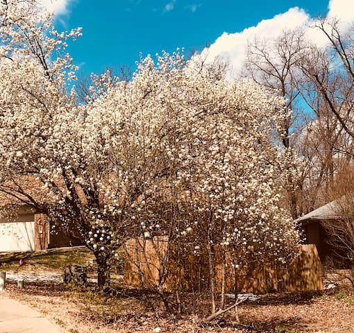 Spring is trying to peek out. Trees in bloom in your front yard!