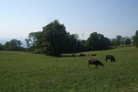 Tra natura animali e torrenti - Schio - Rumah