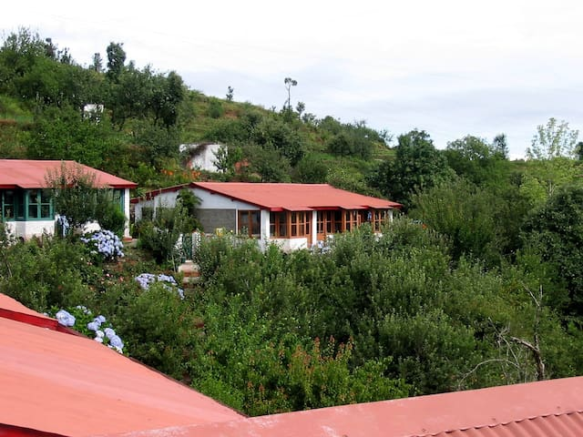 Mountain Trail Resort - Mukteshwar - Mukteshwar - Bed & Breakfast