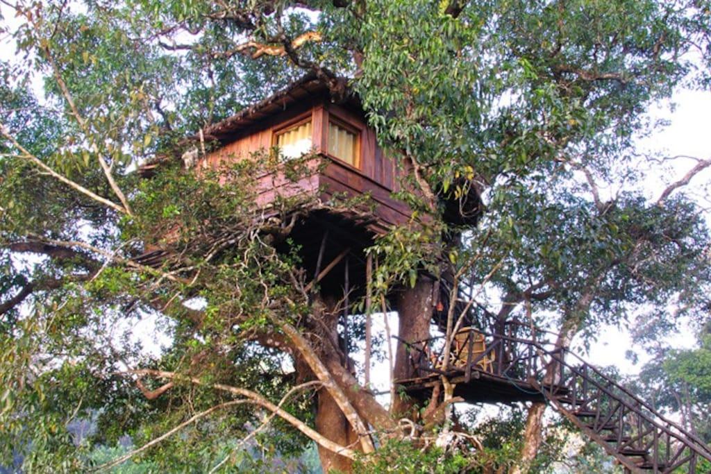 Mango Treehouse.