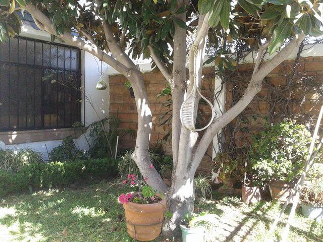 Magnolia House - 2 rooms - San Luis Potosí - House