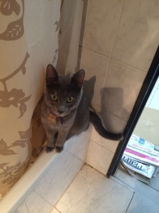 Uma est notre chat