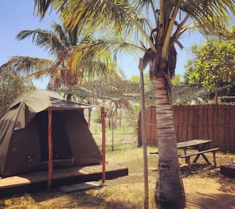 Glamping surrounded by palmtrees