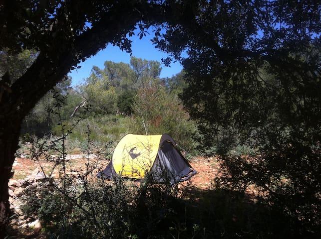 Expérience Nature Escargot - Algaida - Tenda