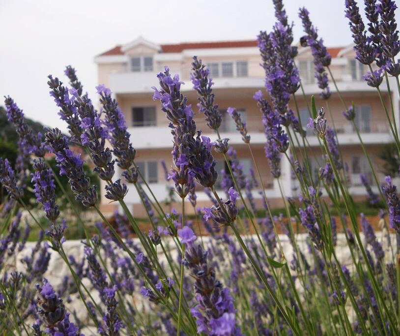Медитеранская растительность около дома.