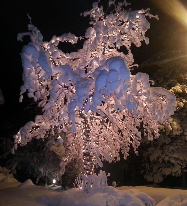Tree in it´s winter costume
