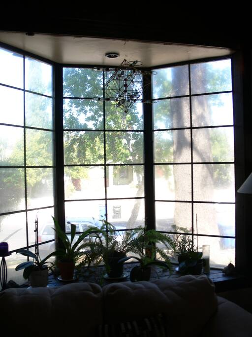 Front bay window, with orchids and other plants.