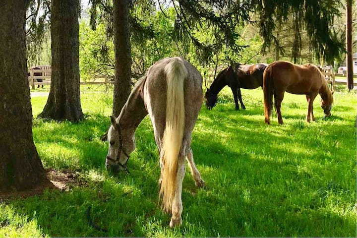 Retreat to Country Getaway on Horse Farm; Sleeps 8