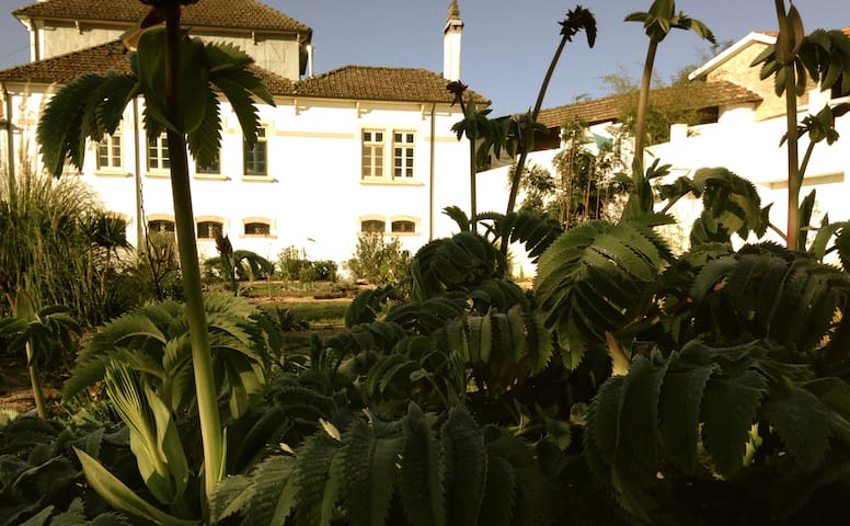 View of the house from the flower garden.
