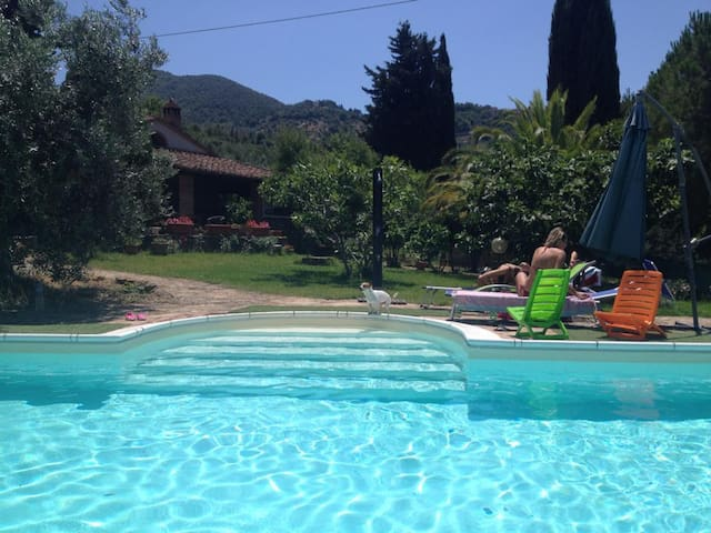 tuscany, house with swimming pool - Scarlino - Villa