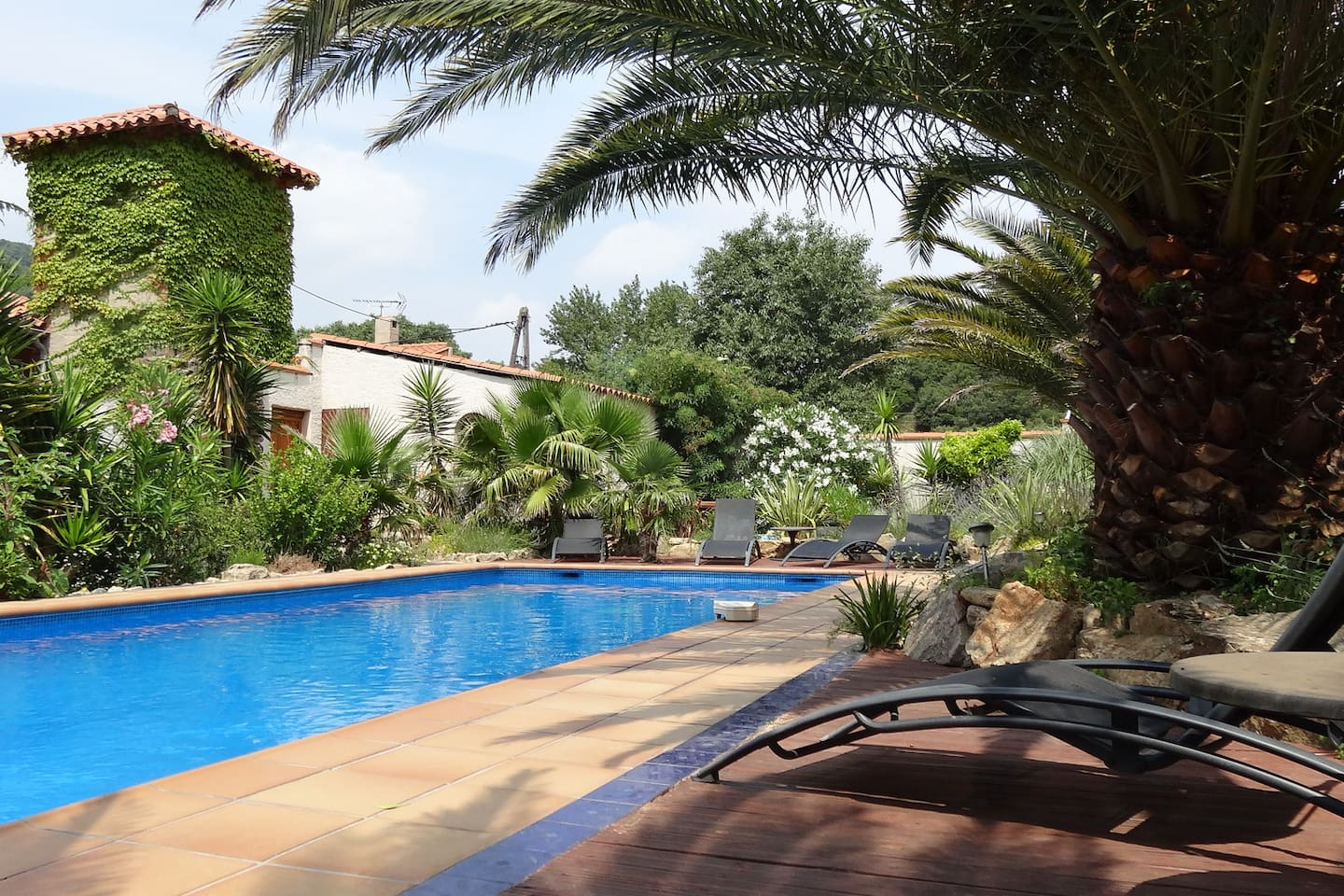 swimming pool in palm trees garden