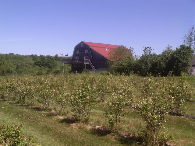 Barn Conversion in vineyard(Two) - Bear River - Bed & Breakfast