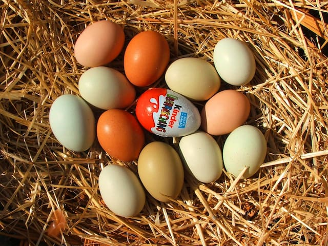 Easter eggs from our heritage chickens