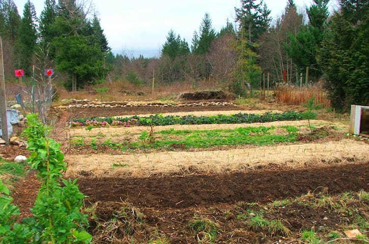 Growing local and organic