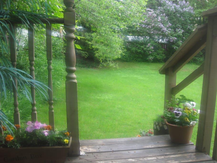 The backyard.