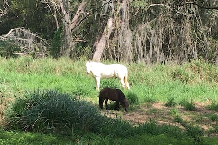 Country in the City - Horses, Peace and Quiet - 阿尔塔蒙特斯普林斯(Altamonte Springs) - 自然小屋
