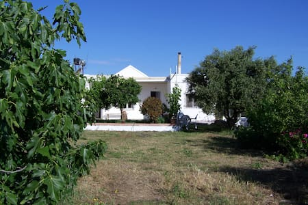 Bungalow in big olive field,3 Guest - Kampani