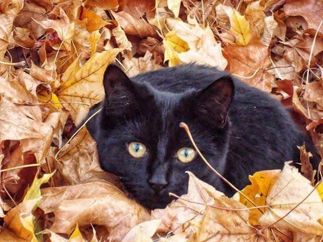 Our cat Kobe