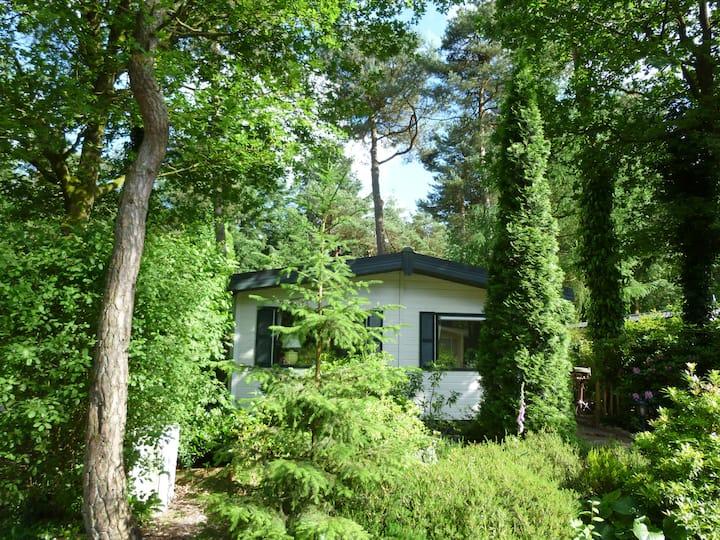 Heerlijk vakantiehuis Diever, aan de bosrand!