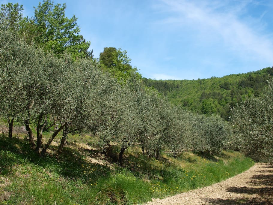 Enjoy a walk in the olive groves