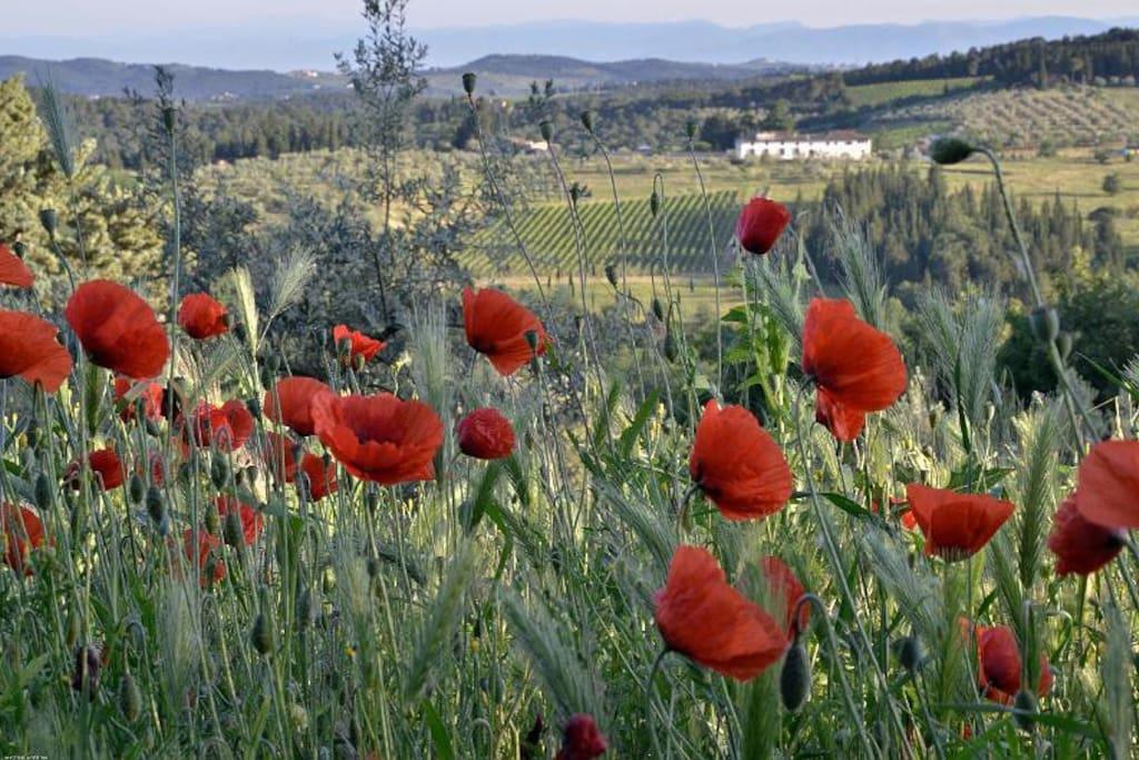 Wildflowers  at Ancora del Chianti EcoBB & Art Yoga Retreat