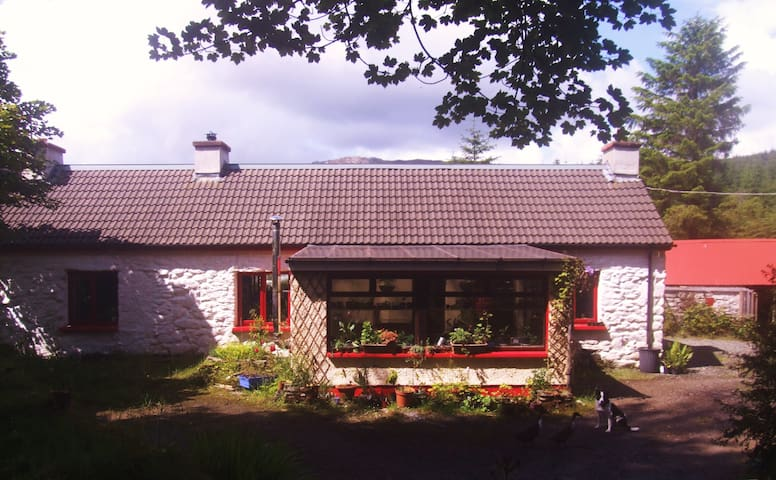 Relax in the hills of Donegal  - Fintown - Wikt i opierunek
