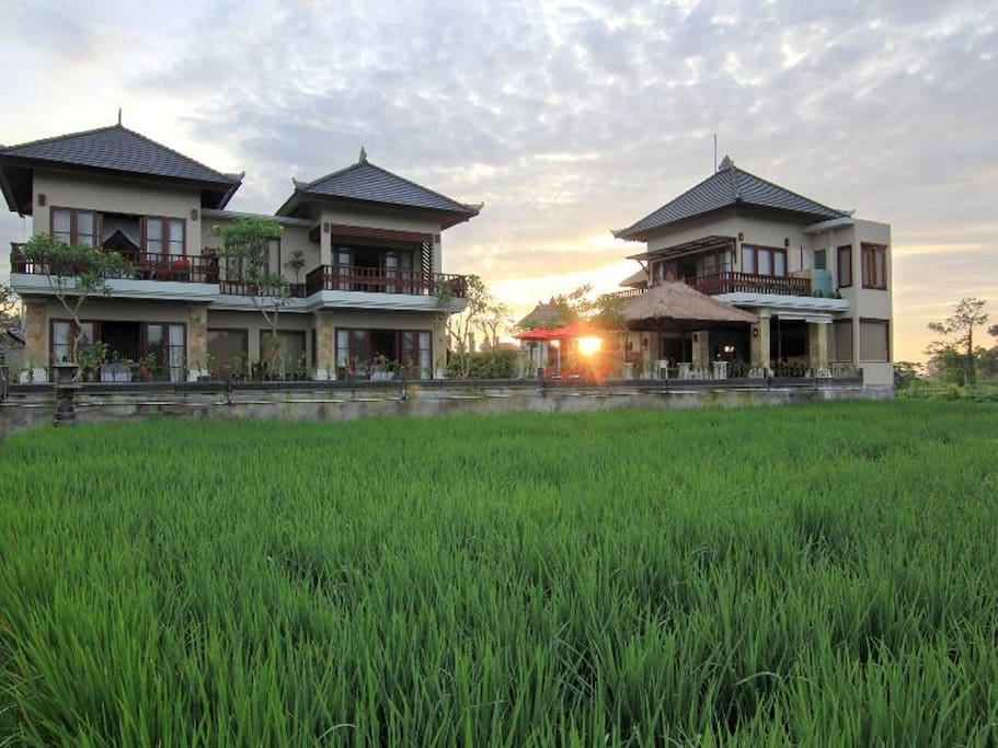 Surrounded by the ever-changing, ancient rice fields