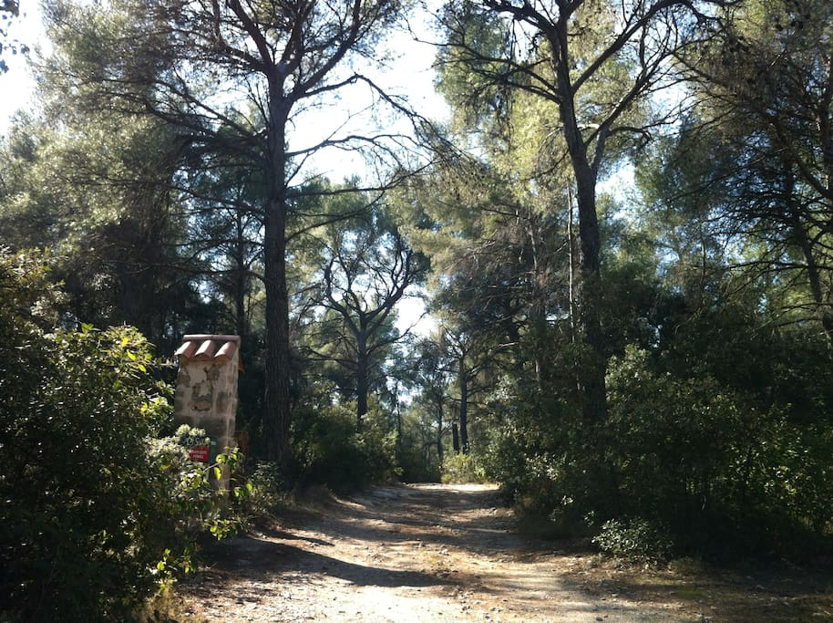 When you drive up there, you abruptly leave the agitation of the city for a beautiful, natural surroundings. The house is located at the end of a 300m trail through the woods.