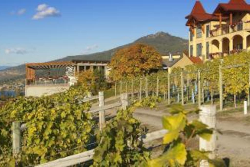 Visit the local wineries!