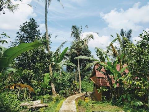 Bali Mountain Forest Cabin