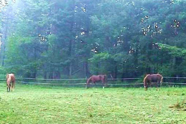 Maple Spring Morgan Horse Farm
