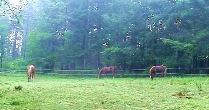 Maple Spring Morgan Horse Farm\monthly stays only.