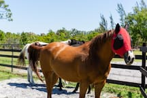 """Sarge sporting a """"fly mask!"""""""