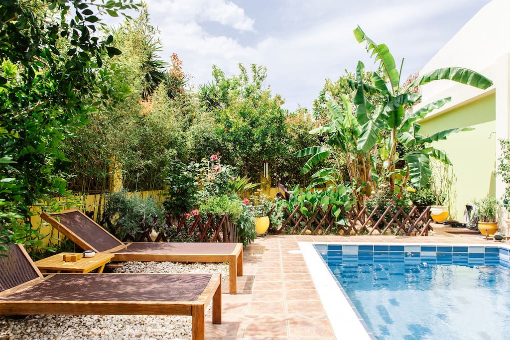 The swimming pool & the garden as seen from the veranda.