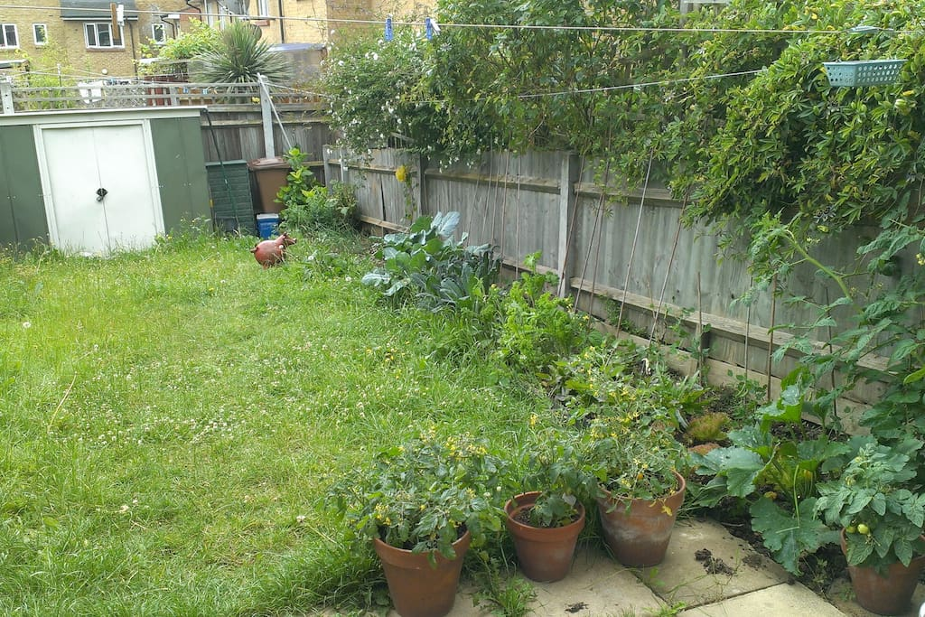 Our Garden and vegetable patch