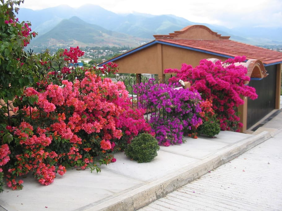 Our home from the street, bugambilias in fullest bloom