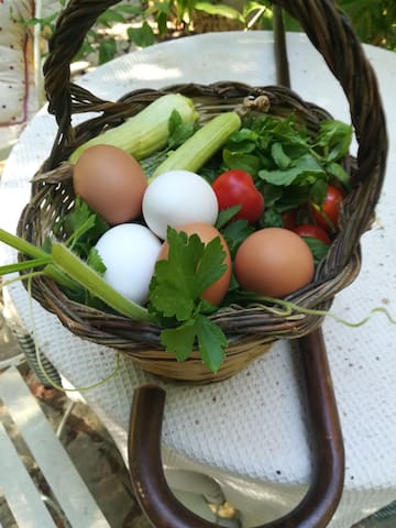 Uova di casa