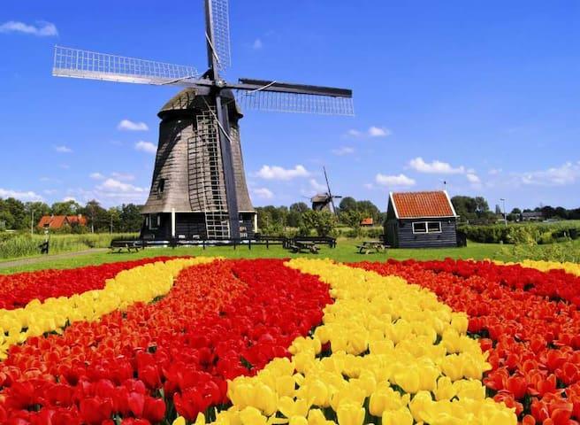 Bollenvelden in West-Friesland