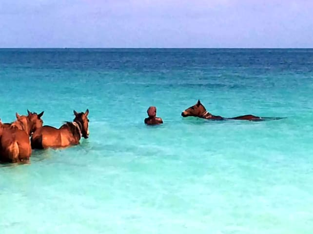 Sun, beach and enjoy Antigua w/breakfast