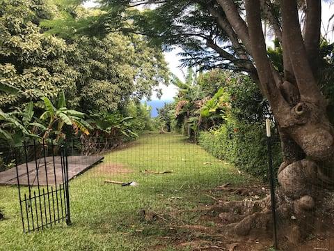 Luana Ola, Ocean View Tropical Gulch near Waipio